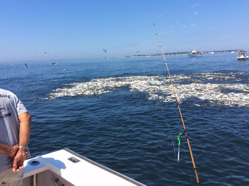 Ginny g cape cod fishing charters provincetown sport for Striper fishing cape cod