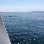 Provincetown Whale Watching